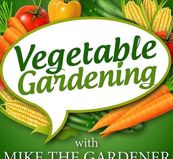 Stacey Chillemi Discusses How Herbs, Fruits and Vegetables Grown from Our Garden Can Prevent and Heal Our Medical Conditions